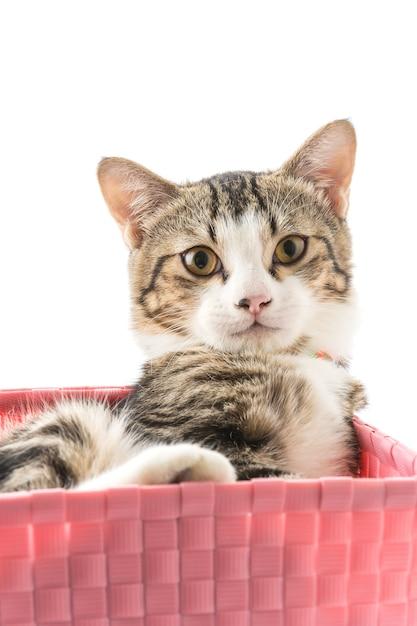 Kat in mandje Gratis Foto