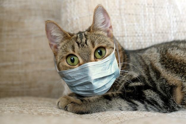 Kat in medisch masker op quarantaine thuis. Premium Foto