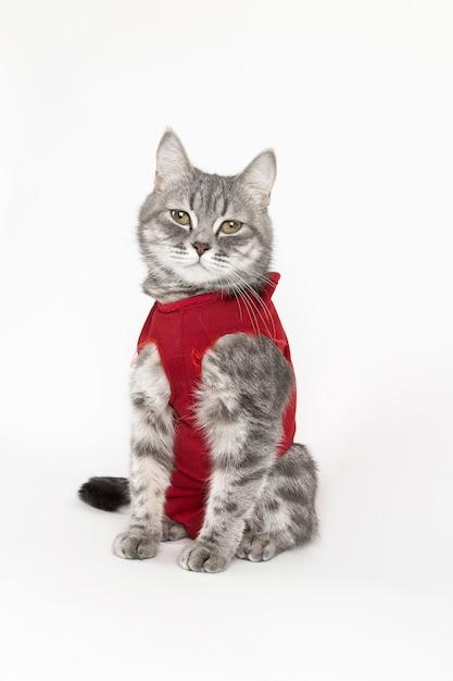 Kat in rode medische deken voor katten, isoleren op wit Premium Foto