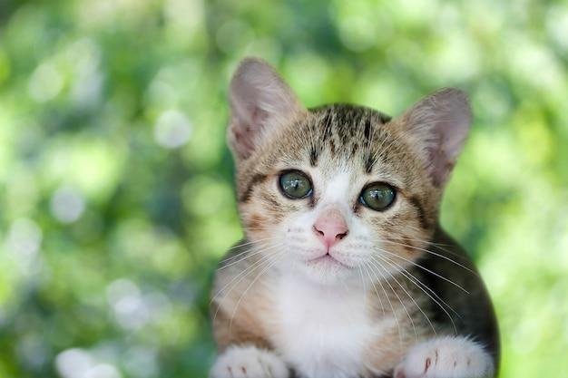 Kat kitten Premium Foto