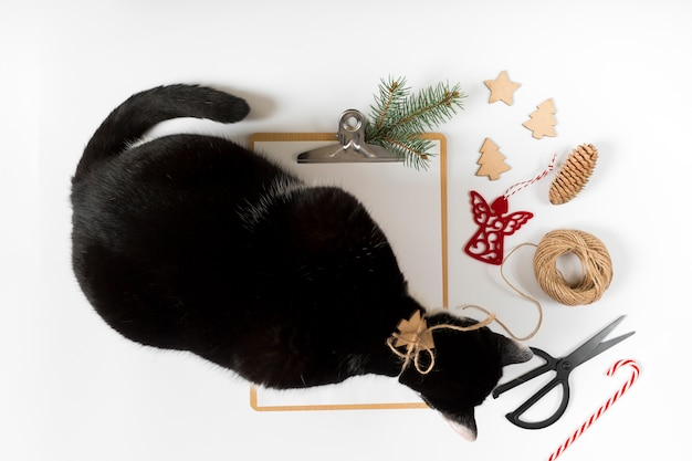 Kat met klembord op witte tafel Gratis Foto