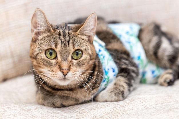 Kat met pleisters herstelt na de operatie en ziet er geamuseerd uit Premium Foto