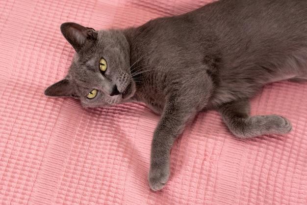 Kat ontspannen op de bank en deken Premium Foto