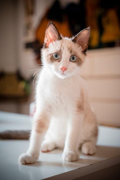 Kat op de tafel Premium Foto