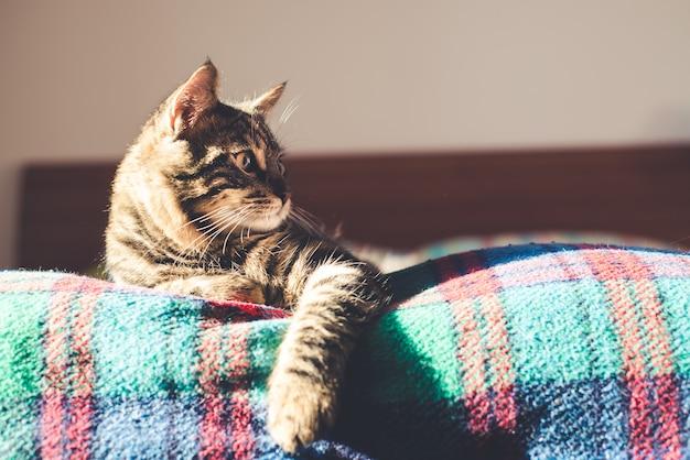 Kat op het bed thuis Premium Foto