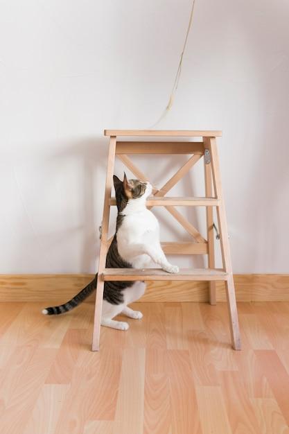 Kat spelen met stro Gratis Foto