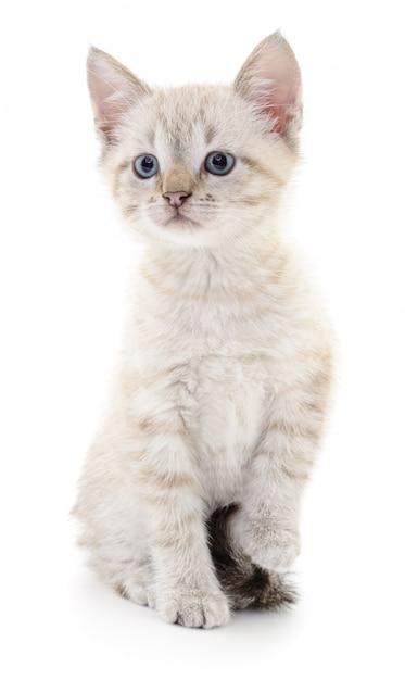 Katje op een witte achtergrond Premium Foto