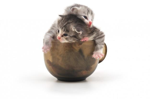Katjes in beker geïsoleerd Premium Foto