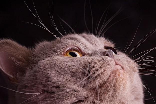 Kattenhoofd dicht omhoog Premium Foto
