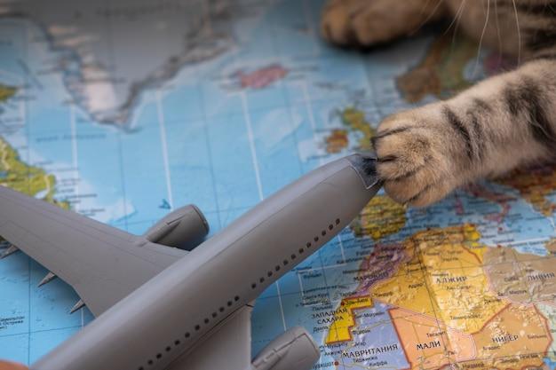 Kattenpoot die een vliegtuigstuk speelgoed houdt Gratis Foto