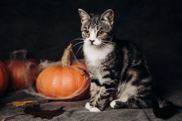 Kattenzitting bij halloween-decoratie Premium Foto
