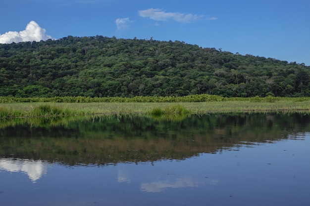 Kaw marsh, marais de kaw, frans guyana, frankrijk Gratis Foto