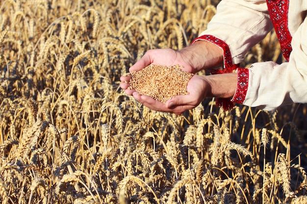 Kegels in de hand over nieuwe oogst Premium Foto
