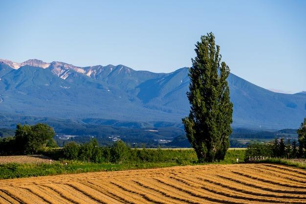 Ken en mary-boom met de berg en de blauwe hemelachtergrond in hokkaido Premium Foto