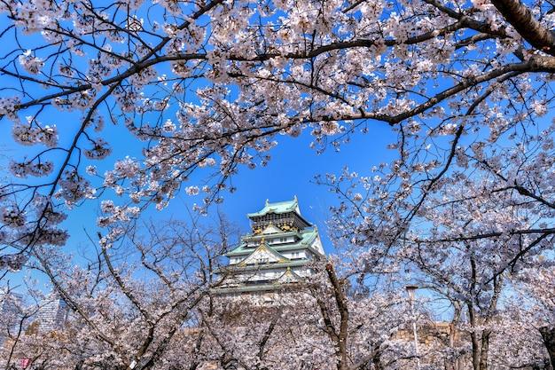 Kersenbloesems en kasteel in osaka, japan. Gratis Foto
