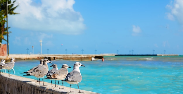 Key west florida strand clearence s higgs Premium Foto