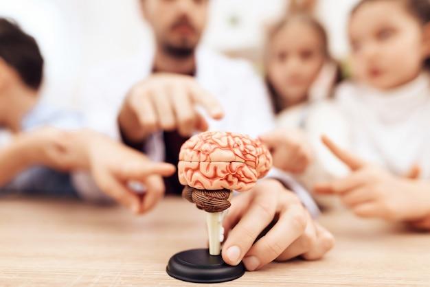 Kinderen met leraar kijken naar een model van het menselijk brein. Premium Foto