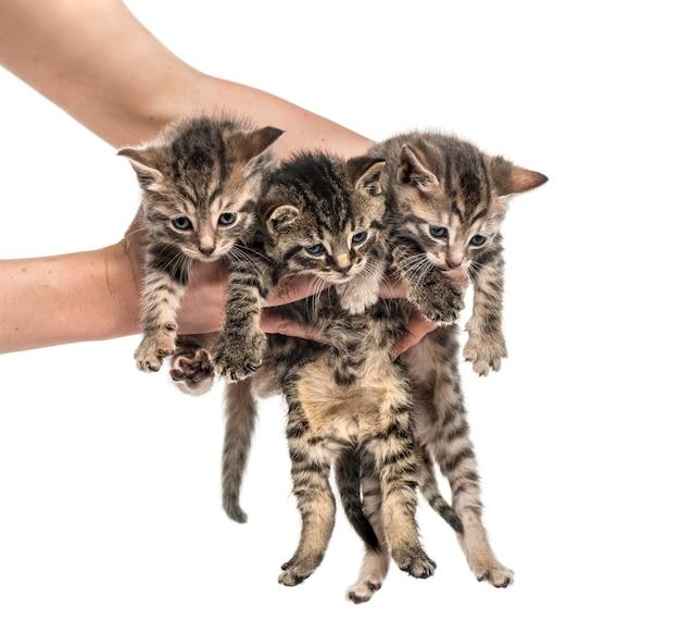 Kittens opgeheven door menselijke handen, geïsoleerd op wit Premium Foto