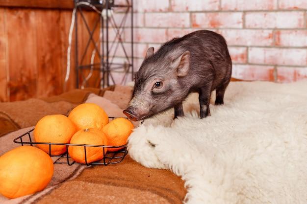 Klein dier en fruit Premium Foto