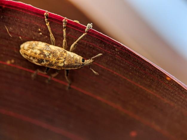 Klein insect op een groen blad, met wazig Premium Foto