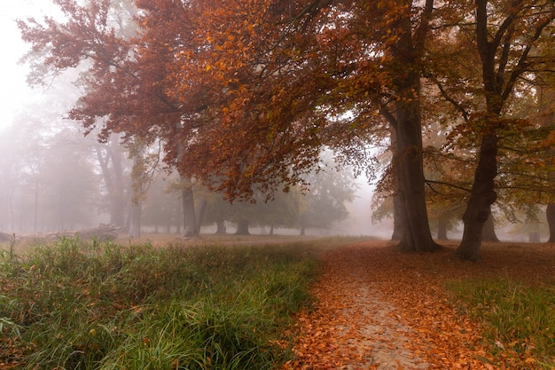 Klein pad in de mist. de herfstkleuren op een nevelige ochtend, mooie bomen in het bos in denemarken Premium Foto