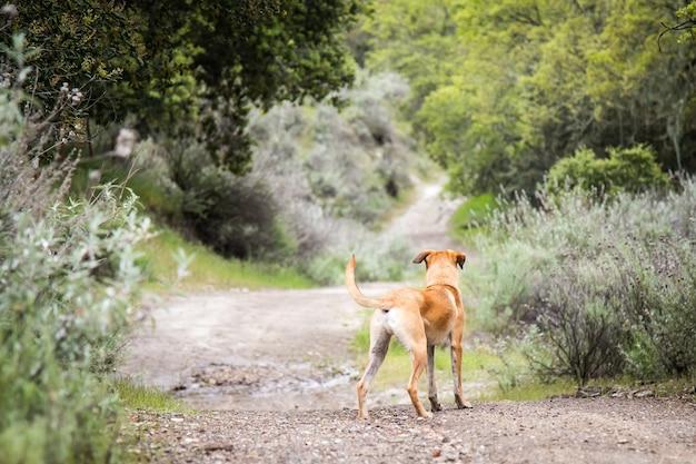 Kleine black mouth cur-hond die midden op een onverharde weg staat, omringd door bomen en struiken Gratis Foto