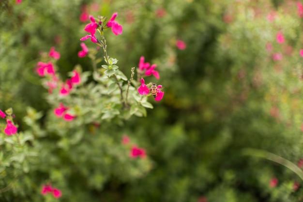 Kleine bloemen op struik in tuin Gratis Foto