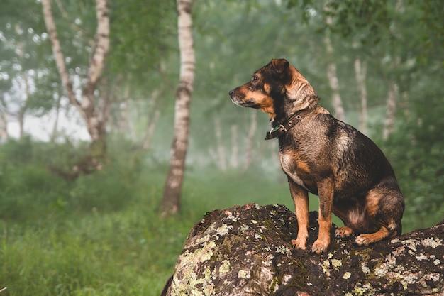 Kleine bruine hond zit op een kromme berkenstam. Premium Foto