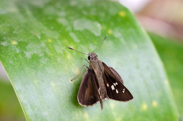 Kleine bruine vlinder op groen blad Premium Foto