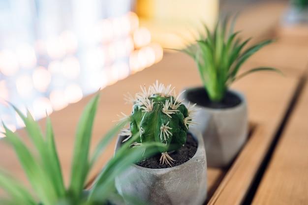 Kleine cactus en aloë in kleine potten Gratis Foto