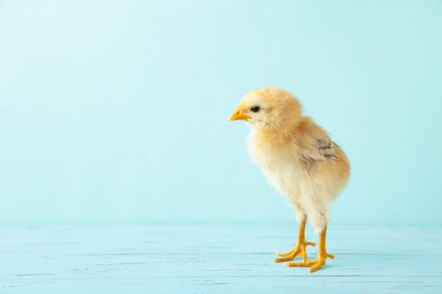 Kleine gele kip op de blauwe houten achtergrond Premium Foto