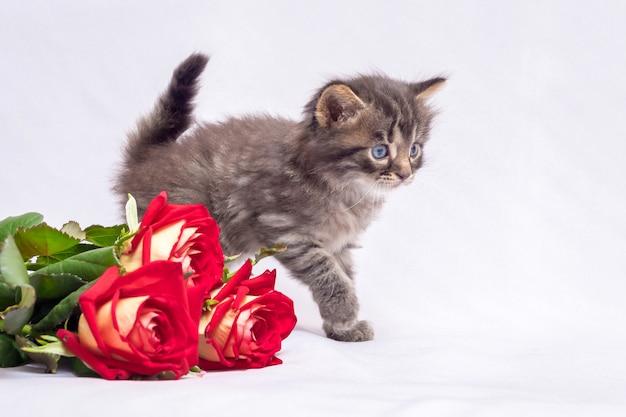 Kleine gestreepte kitten in de buurt van een bos van rode rozen. bloemen voor groeten op de dag van geboorte Premium Foto