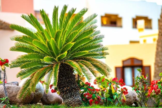 Kleine groene palmboom omringd met fel bloeiende bloemen Premium Foto