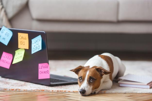 Kleine hond binnen. mooie puppy met pc. huisdier op laptop werkt. hond mist zijn eigenaar. jack russel terrier alleen bij de computer. drukke hond. Premium Foto