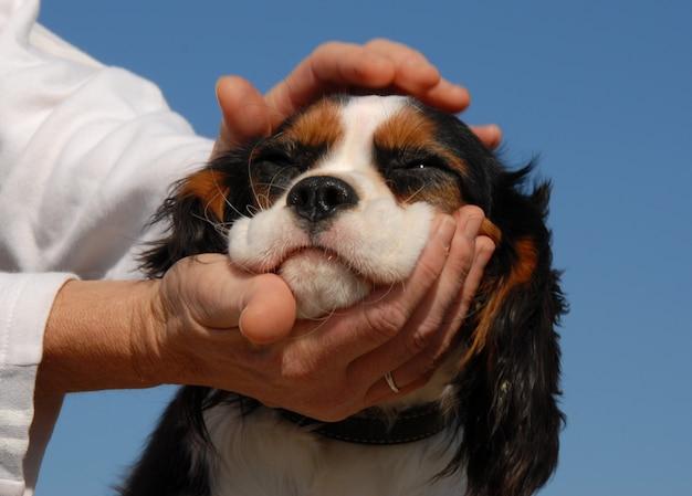 Kleine hond en vrouw hand Premium Foto