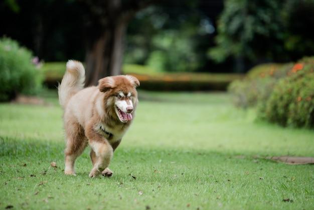 Kleine hond in een park buitenshuis. levensstijl portret. Gratis Foto