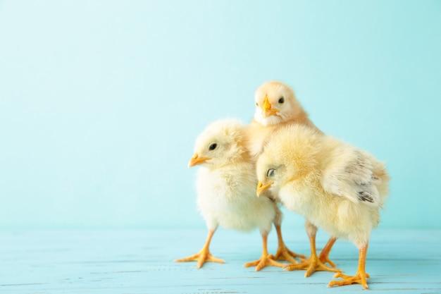 Kleine kippen op blauw Premium Foto
