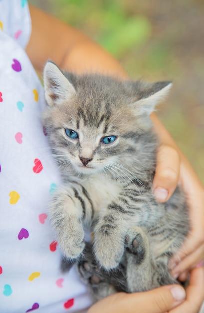 Kleine kittens in de handen van kinderen Premium Foto