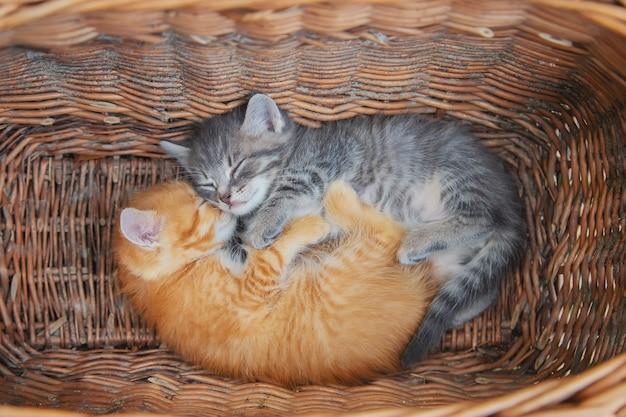 Kleine kittens zijn grijs en rood Premium Foto