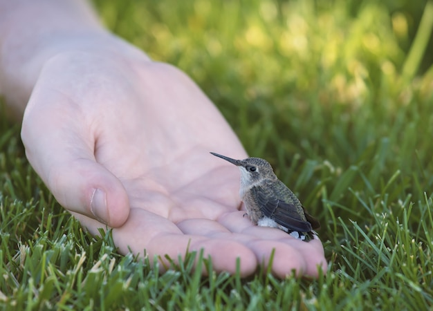 Kleine kolibrie zittend op een menselijke hand omgeven door gras onder zonlicht Gratis Foto