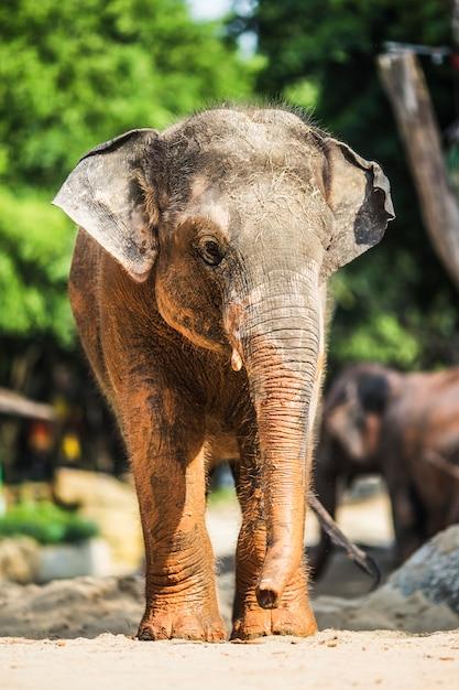 Kleine olifant met modder vlekken Gratis Foto