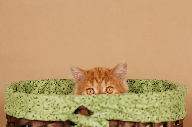 Kleine pluizige gember kitten gluurt uit een rieten mand Premium Foto