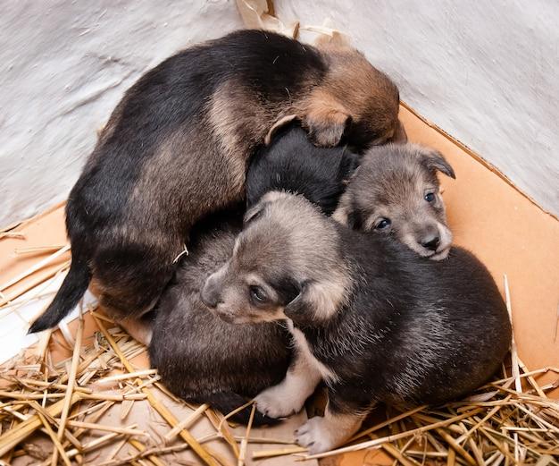 Kleine puppy's op een stromatje worden tegen elkaar gedrukt Premium Foto