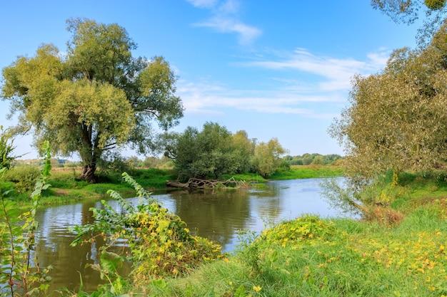 Kleine rivier met groene bomen en struiken aan een kust tegen blauwe hemel in zonnige herfst ochtend. rivierlandschap Premium Foto