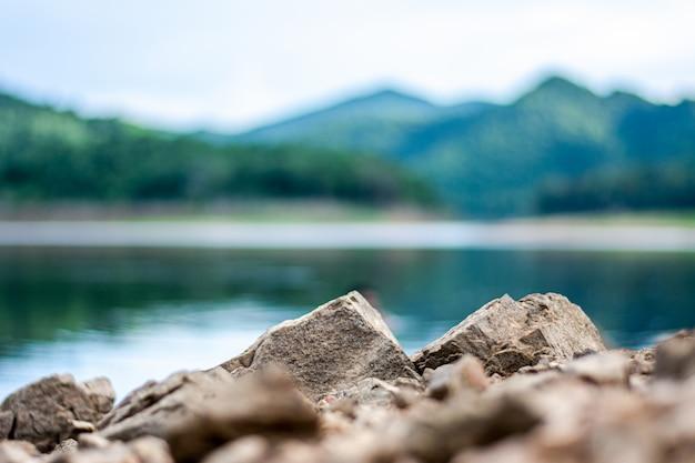 Kleine rots in het bos. Premium Foto