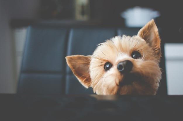 Kleine schattige hond portret Gratis Foto