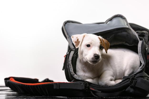 Kleine schattige hond zit in een zwarte tas en kijkt uit   Premium Foto