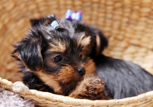 Kleine schattige puppy thuis Gratis Foto