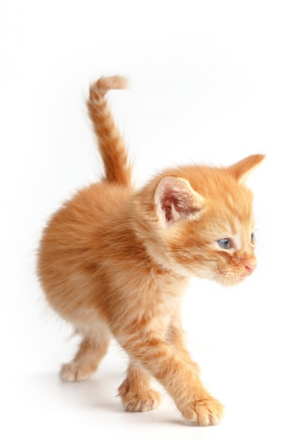 Kleine schattige rode kitten met blauwe ogen Premium Foto