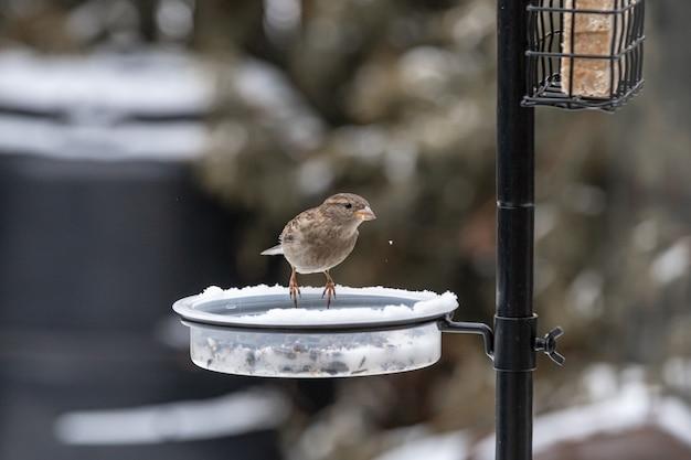 Kleine schattige vogel zittend op de feeder en eten in de winter | Gratis  Foto